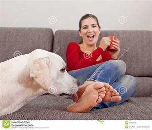 royalty free stock photo dog licking toes image