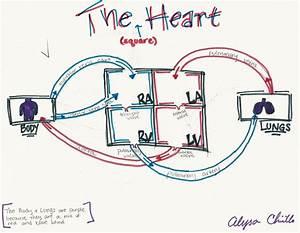 Human Heart Diagram Box Gallery