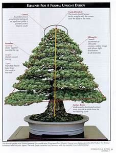 Bonsai Arten Für Anfänger : 181 besten bonsai gestaltung pflege bilder auf pinterest bonsai g rtnern und pflanzen ~ Sanjose-hotels-ca.com Haus und Dekorationen
