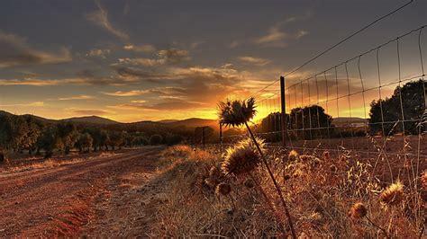 landscapes nature fences grass garden thistles autumn