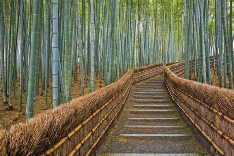 kyoto sagano bamboo forest kansai japan walking tours