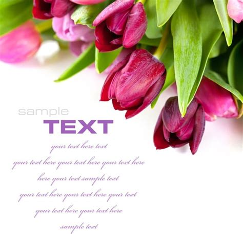 Beautiful Hd Fresh Image by Flowers Background Free Stock Photos