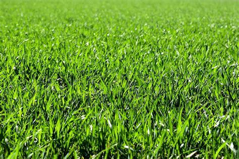 of grass 9 ways to neutralize dog urine for grass repair grass prevent lawn burn