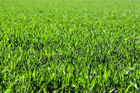 bissell carpet steam cleaner 9 ways to neutralize urine for grass repair grass