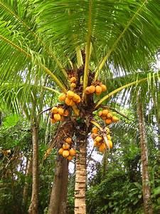 Tropical fruit in the permaculture garden   The Jiwa Damai ...