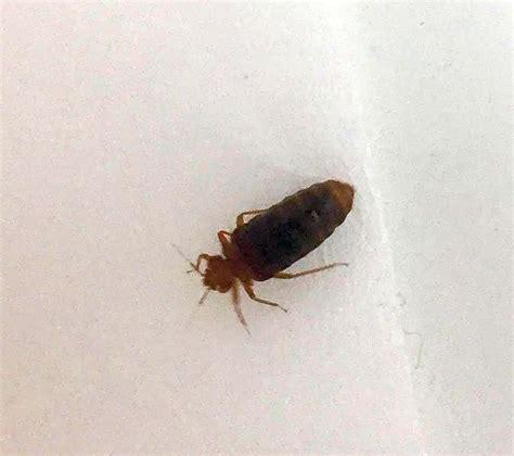 bed bug pest control canada