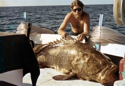 grouper goliath florida marquesas keys december demaria don bear limits officials harvesting allow ask should state tommy 1978 thomas taken