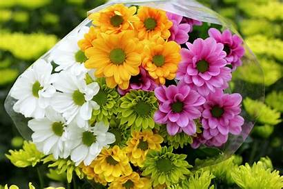 Flowers Bouquets Chrysanthemums Desktop Wallpapers Backgrounds Mobile