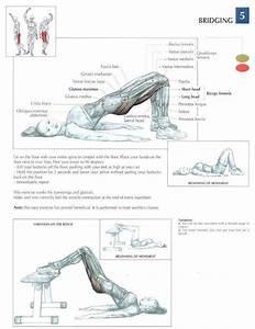 Bridging  U2666  Health  Fitness  Exercises  Diagrams  Body
