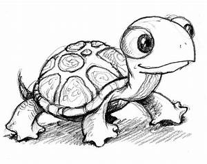 Lovely Small Pets: The Shaped Used to Draw Turtles
