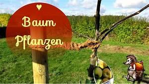Wann Apfelbaum Pflanzen : obstbaum pflanzen wir pflanzen unseren ersten baum ~ Lizthompson.info Haus und Dekorationen