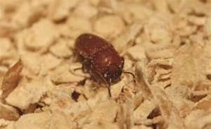 Kleine Tiere Im Mehl : mittel gegen mehlwrmer eine kchenschabe bild mittel gegen ~ Lizthompson.info Haus und Dekorationen