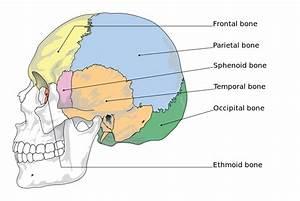 Tmj  The Temporomandibular Joint