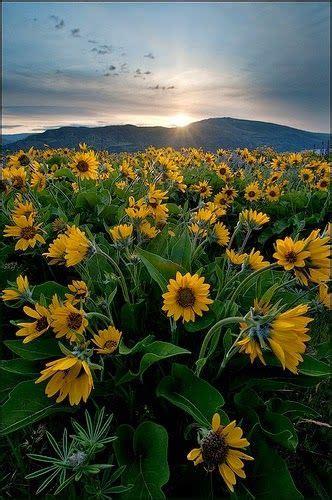 ภาพสวย วิว ธรรมชาติ ดอกไม้ สวยมาก ~ Live | การถ่ายภาพ ...