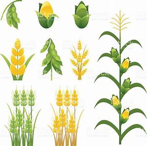 Agriculture Farm Crops And Plants Icons Set Of Nine Stock ...