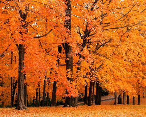 Download Trees Autumn Wallpaper 1280x1024 | Wallpoper #423909