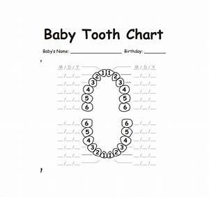 Free 11  Sample Teeth Chart Templates In Pdf