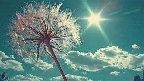 Hd Happy Desktop Wallpaper happy sun free hd wallpapers for desktop hd wallpaper