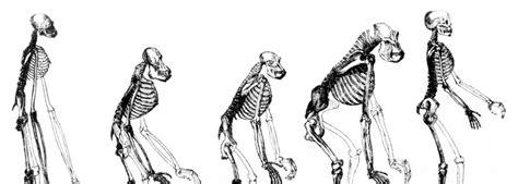 Human Evolutionary Biology Harvard University The