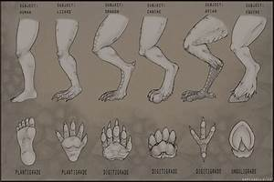 Commission  Adf  Foot And Leg Reference Guide By