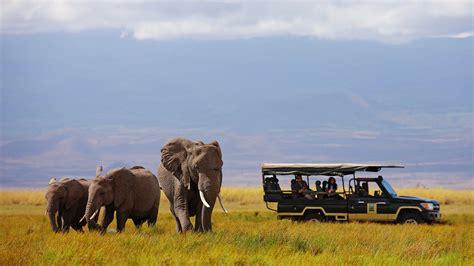 elephants  amboseli masai mara big cats natural