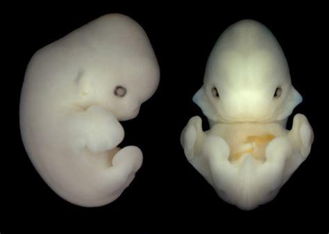 bat embryos  simply adorbs featured creature