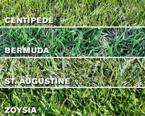Florida Grass Types And Mowing Heights L Rt