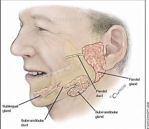 Figure 1 From A Guide To Salivary Gland Disorders