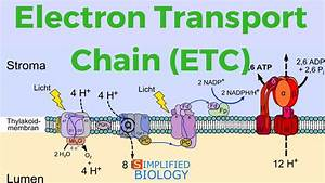 Electron Transport Chain For Neet  Aipmt  Mcat  Aiims