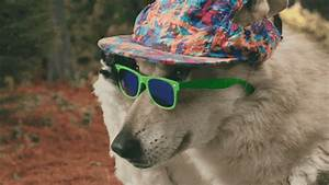 Wolf Dog Deal With It GIF by Old Spice - Find & Share on GIPHY