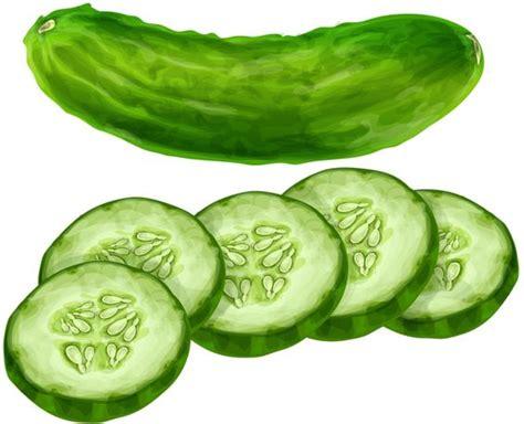 cucumber slice clipart cucumber pepino fruits and vegetables album