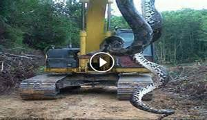 Largest Biggest Snake Ever