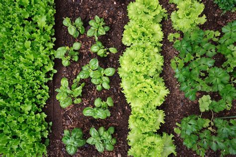 Plant Incompatibility  What Plants Should Not Be Planted