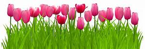 Tulip Clipart Banner Many Interesting Cliparts