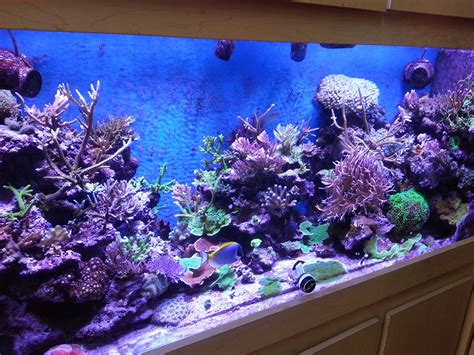 saltwater tank lights leds specifically for growing corals orphek review