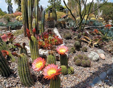 cactus garden succulent gardens ferrebeekeeper