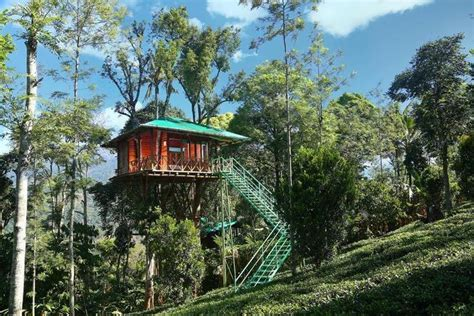 treehouses  south india thatll bond   natures mystique