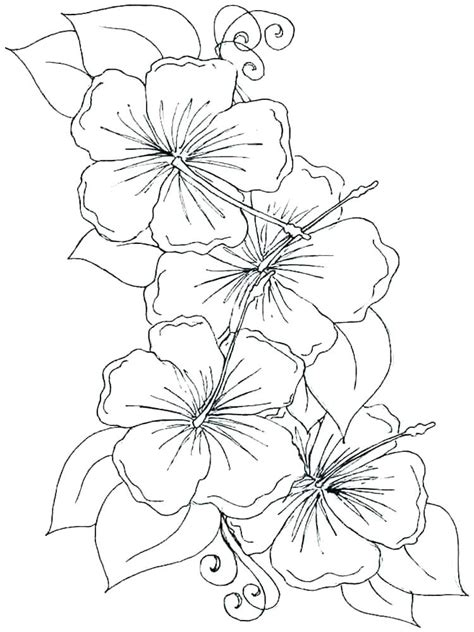 orchid coloring pages  getcoloringscom  printable