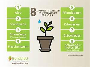 Pflanzen Die Wenig Wasser Brauchen : 8 robuste zimmerpflanzen die besonders wenig wasser brauchen ~ Frokenaadalensverden.com Haus und Dekorationen