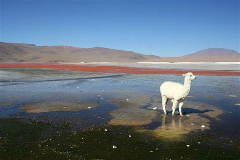 20071103 Laguna Colorada, Bolivia 005 | Gary Koutsoubis ...