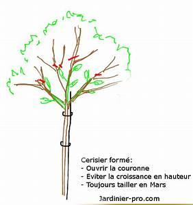 Taille De Cerisier : taille de formation d 39 un cerisier apprendre a former un ~ Melissatoandfro.com Idées de Décoration