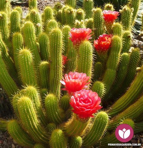 cactus suculentas primavera garden center