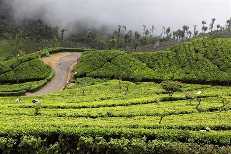 Sri Lanka - Haputale tea plantations 04