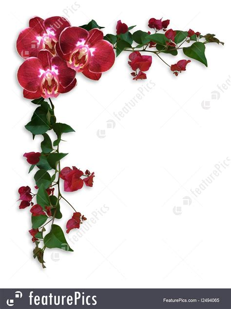 orchids  bougainvillea floral border stock illustration