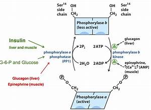 Pin On Bchm 2024  Concepts Of Biochemistry