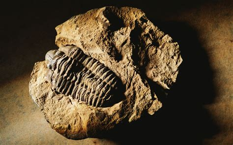 Fossils images Fossils HD wallpaper and background photos ...