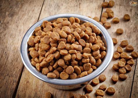 dry dog food  appealing   dog