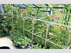 15 Most Popular Vegetables And Fruits To Grow In A Green