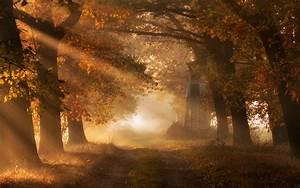 Nature, Landscape, Morning, Sun, Rays, Fall, Trees, Mist