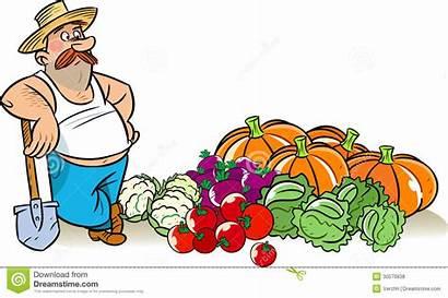 Harvest Vegetable Illustration Vegetables Pile Near Garden